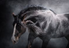 Lёlё - Favorite photos - photos - equestrian.ru