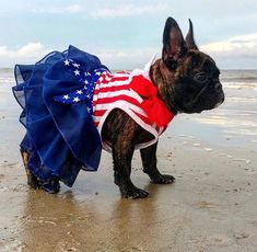 French Bulldog in a Patriotic Dress at the Beach❤️