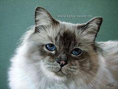 Katzenzeichnungen und Katzenportraits in Pastellkreide - Tierzeichnungen und Tierportraits von Katja Sauer / Cat paintings and cat portraits in soft pastels - Animal painting and animal portraits by Katja Sauer