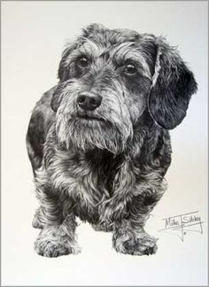 """""""WireHaired Dachshund"""" by artist Mike Sibley"""
