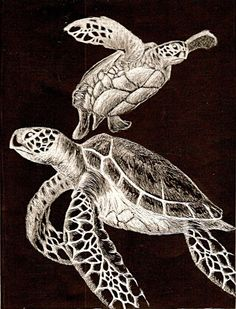Just some scratch art turtles I did for an 11th grade art project. It took just about forever! but i liked how it turned out.