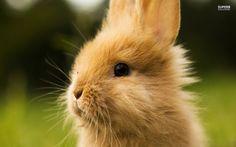 Rabbit Wallpapers  Wallpaper  1600×1200 Rabbit Image Wallpapers (53 Wallpapers) | Adorable Wallpapers