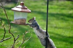 Keep Squirrels out of Bird Feeders