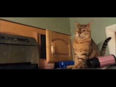 """BEST FUNNY TRY NOT TO LAUGH FUNNY CAT FAILS COMPILATION - http://positivelifemagazine.com/best-funny-try-not-to-laugh-funny-cat-fails-compilation/ http://img.youtube.com/vi/jr8evP1Miio/0.jpg *Today Special Deal*  *Today Special Deal* Please follow and like us:  var addthis_config =   url: """""""",  title: """""""""""