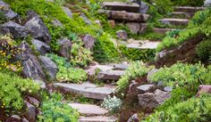 Build a rockery in your garden with this simple guide and find out how to…