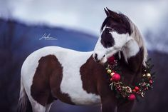 Beautiful Horses, Animals Beautiful, Cute Animals, Horses And Dogs, Wild Horses, Arab Babies, Christmas Horses, Wyoming, Horse Pictures