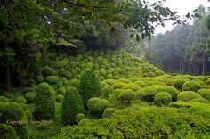 Topiary at Yamanaka Castle, Japan.