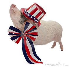 Pig Dressed for Fourth of July by Adogslifephoto, via Dreamstime