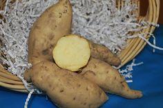 Hayman (White Hamon, White Haymon) Sweet Potato 6 Slips  $10.00