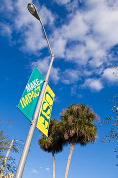 #USF students make an impact every day!