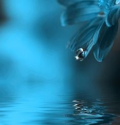 Water drop by Kevin Carden