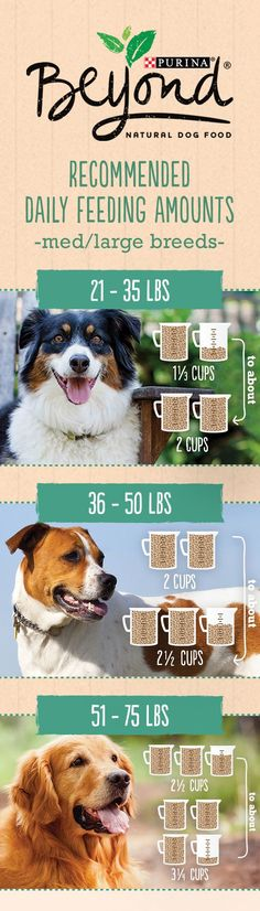 This is the ultimate pet nutrition guide filled with pet tips and advice. This will cover everything from diet to exercise. Must read! Money back guaranteed! #bestforyourpets #petadvice #pettips