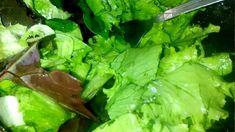 Lettuce, Celery, Spinach, Make It Yourself, Vegetables, Food, Salads, Vegetable Recipes, Eten