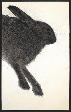 Hare drypoint