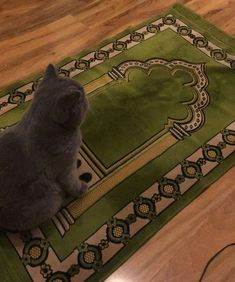 """Cats are Muslim don't argue with me"" Animals And Pets, Baby Animals, Cute Animals, Cute Kittens, Cats And Kittens, Cute Love Memes, Animal Quotes, My Animal, Beautiful Cats"