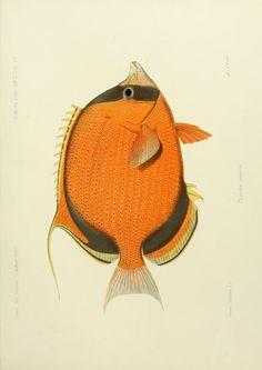 Bd. 2 (1873-1875) - Journal des Museum Godeffroy. - Biodiversity Heritage Library