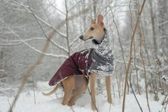 WHIPPET Winter Dog Coat Winter Coat for Dogs Waterproof Dog