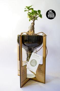 Ficus Gingseng, de 32cm, en botellas de vidrio recicladas cortadas y pulidas, sistema de riego por capilaridad, se riega solo una vez al mes, para mas informacion: http://www.thelittleyisus.com/