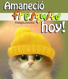 199 Mejores Imágenes De Mininos En 2019 Funny Animals Funny Cats