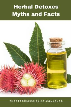 Herbal detoxes are sometimes used to support drug and alcohol withdrawal in rehab centers and yu can learn about them in this guest article. Castor Oil Cleanse, Alcohol Withdrawal, Detox Program, Drugs, Health And Wellness, Herbalism, Remedies, Herbs, Facts