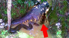As Criaturas Mais Mortais Da Amazônia