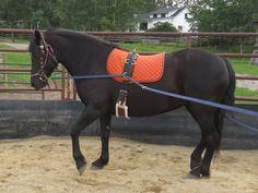 Mares - Canadian Hay Ranch - Horse Breeder in Calgary