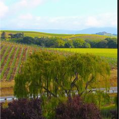 View from Domaine Carneros, Napa Valley
