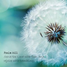 Psalm 2:11 Serve the Lord with fear, and rejoice with trembling