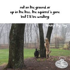Haiku by Dog: not on the ground or / up in the tree, the squirrel's gone / but I'll be waiting