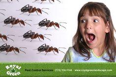 Pest  Control Company in Canada  http://www.avonpestcontrol.ca/
