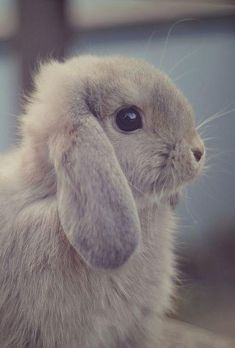 and pets runescape, and pets essayscorer student, wild and pets sorting worksheet kindergarten english, animals and pets movie bunny name meaning. Cute Baby Bunnies, Funny Bunnies, Cute Baby Animals, Animals And Pets, Funny Animals, Wild Animals, Farm Animals, Baby Animal Drawings, Pet Rabbit