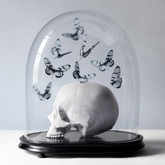 Histoires Naturelles by Juliette Bates, Photography. Vanitas. Skull and butterflies under a glass dome.