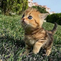 Cute Animals Together Gif long Cutest Kittens In The World Pictures once Cute Kittens And Puppies To Draw her Cute Animals Gif Kittens And Puppies, Cute Cats And Kittens, Kittens Cutest, Funny Kittens, Cute Baby Animals, Animals And Pets, Funny Animals, Animals Images, Newborn Kittens