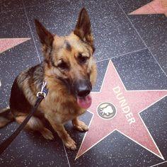 "Good stuff;))Phoenix dog training;) ""k9katelynn"" !!!!! See more about Scottsdale dog training at k9katelynn.com Breedism Is BS: Meet 11 Dangerously Adorable German Shepherds | Dogster"