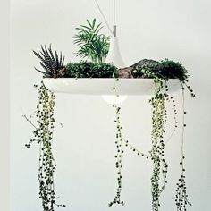 Babylon Light Fixture » This light is awesome! Love that you can put plants in it!