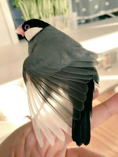 Our goal is to keep old friends, ex-classmates, neighbors and colleagues in touch. Small Birds, Little Birds, Love Birds, Beautiful Birds, Pet Birds, Animals Beautiful, Nature Animals, Animals And Pets, Cute Animals