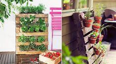 Veja como ter um jardim vertical em sua casa ou apartamento!