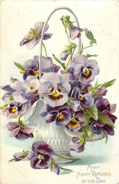 pansies, violet, yellow centred blooms in white porcelain vase with tall looped handle