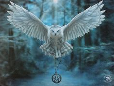 Snowy Owl Wall Plaque Art Print - Anne Stokes Owl in Flight with Pentacle Magick