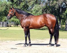 2004 Bay Stallion  First Down Dash x Dinastia Toll Brz, by Toltac    Google Image Result for http://www.stallionesearch.com/images/stallions/660_R.jpg