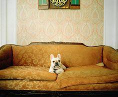 canine chronicles / photographer: winnie au