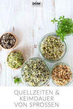 Gerade im Winter sind Sprossen und Keimlinge hervorragend. Superfood, Food Science, Vitamins And Minerals, How To Dry Basil, Sprouts, Veggies, Pumpkin, Herbs, Healthy Recipes