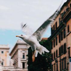 ROMA - Ah bir martı olsam! 💙 #italiandays #onurollstyleontheway