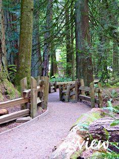 A Nanaimo to Tofino Road Trip - Vancouver Island View