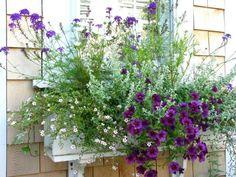 shade plants for window boxes Window Box Plants, Window Box Flowers, Balcony Plants, Window Boxes, Potted Plants, Garden Plants, Shade Plants, Cool Plants, Diy Garden Decor