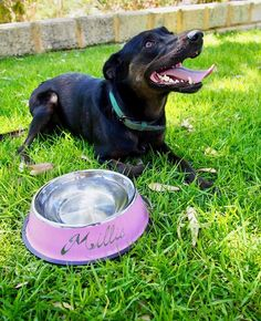 We love spending weekends with our fur friends   How cute are these personalised dog bowls from @engraving_gifts_au ? They come in a range of colours and sizes and you can get them done on the spot at our markets on February 24th! . . .  #perthmakersmarket #makersgunnamake #craftsposure #makerslife #makersgonnamake #makersmovement #perthisok #seeperth #perthpop #urbanlistperth #perthnow #waketomake #supportlocal #perthcreatives #perthtodo #makersofinstagram #perthsmallbusiness #waketomake…