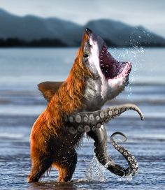 Bearsharktopus! I was attacked by this once. It tried to drag me down into its under water cave. Surrrvvivved iiiit!