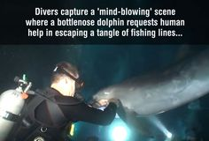 This is the BEST video I have ever watched!!! It's amazing ! A dolphin gets help from a diver