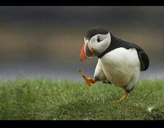 Fågel på promenad