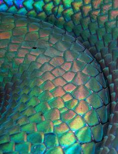 iridescent-snake